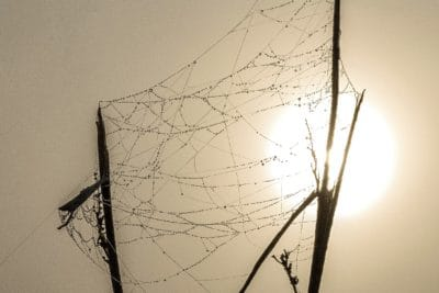spider web, moisture, mist, sunrise, sunlight, Sun, branch, dew