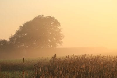 dawn, landscape, sunrise, silhouette, meadow, pasture, landscape, field, sun, sky, rural