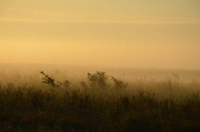 silueta, păşune, ceaţă, peisaj, ceaţă, apus de soare, dawn, copac, câmp, cer