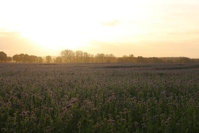 paisagem, campo, natureza, céu, nascer do sol, agricultura, amanhecer, agricultura, árvore