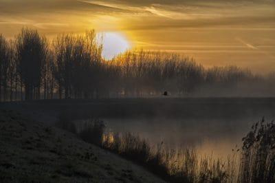 dawn, sunrise, silhouette, swamp, landscape, fog, lake, tree, sun, sky, water