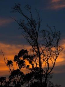 tree, dawn, sunrise, branch, shadow, backlit, silhouette, landscape, dusk