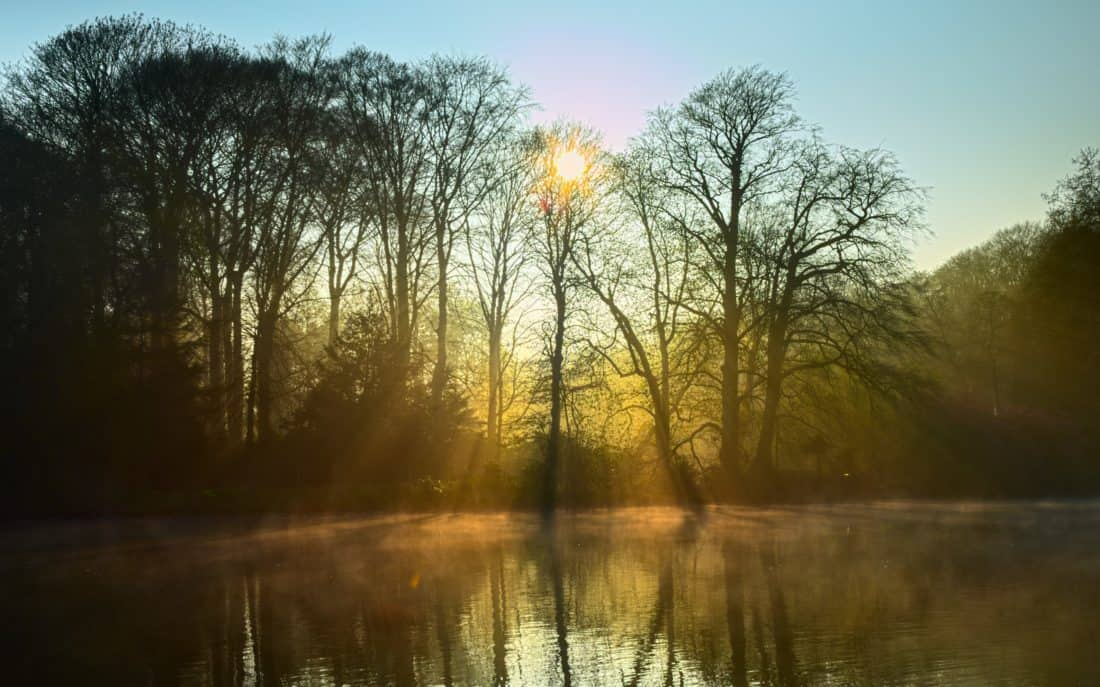 dawn, landscape, tree, nature, fog, sunrise, silhouette, reflection