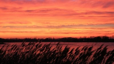 sunrise, swamp, backlit, dawn, landscape, nature, sky, atmosphere, field