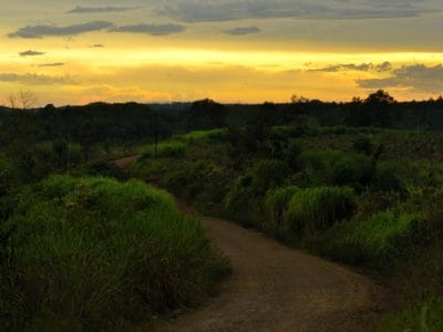 풍경, 어둠, 일출, 국립 공원, 햇빛, 하늘, 나무, 새벽, 야외, 잔디