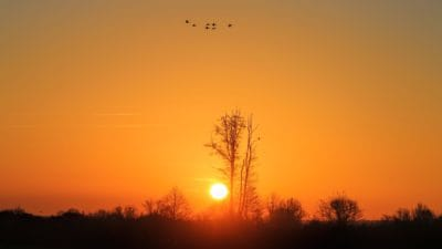 sunrise, sky, dawn, sun, silhouette, fog, landscape, backlit