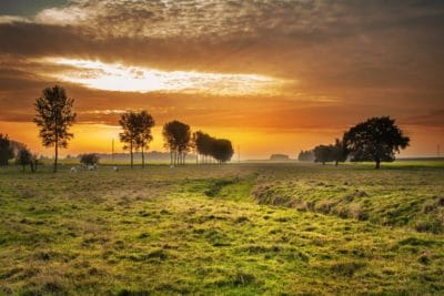 pasture, sunrise, farm, landscape, tree, dawn, nature, sun, grass, barn
