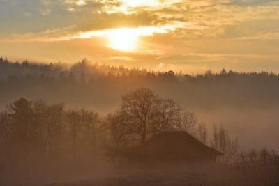 dawn, sunrise, forest, outdoor, evening, landscape, fog, tree, snow, sun