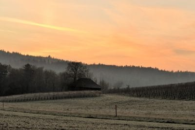 landscape, dawn, sunrise, mist, field, tree, sky, atmosphere, cloud