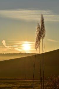 sunrise, reed grass, sunlight, grass, landscape, dawn, sun, sky, nature