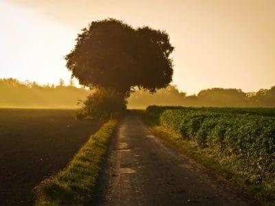 sunrise, road, rural, summer, landscape, dawn, road, sky, tree, nature, rural