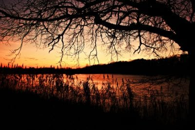 Alba, albero, alba, ombra, buio, paesaggio, natura, sagoma, sole