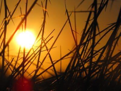 sunrise, shadow, darkness, sun, dawn, sky, grass