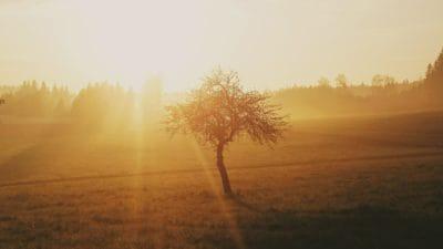 Alba, alba, nebbia, campo, sole, nebbia, paesaggio, nebbia, sole, albero, retroilluminato