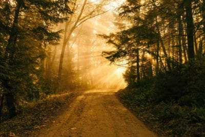 forest road, silhouette, sunrise, tree, wood, landscape, road, fog, dawn, mist, nature