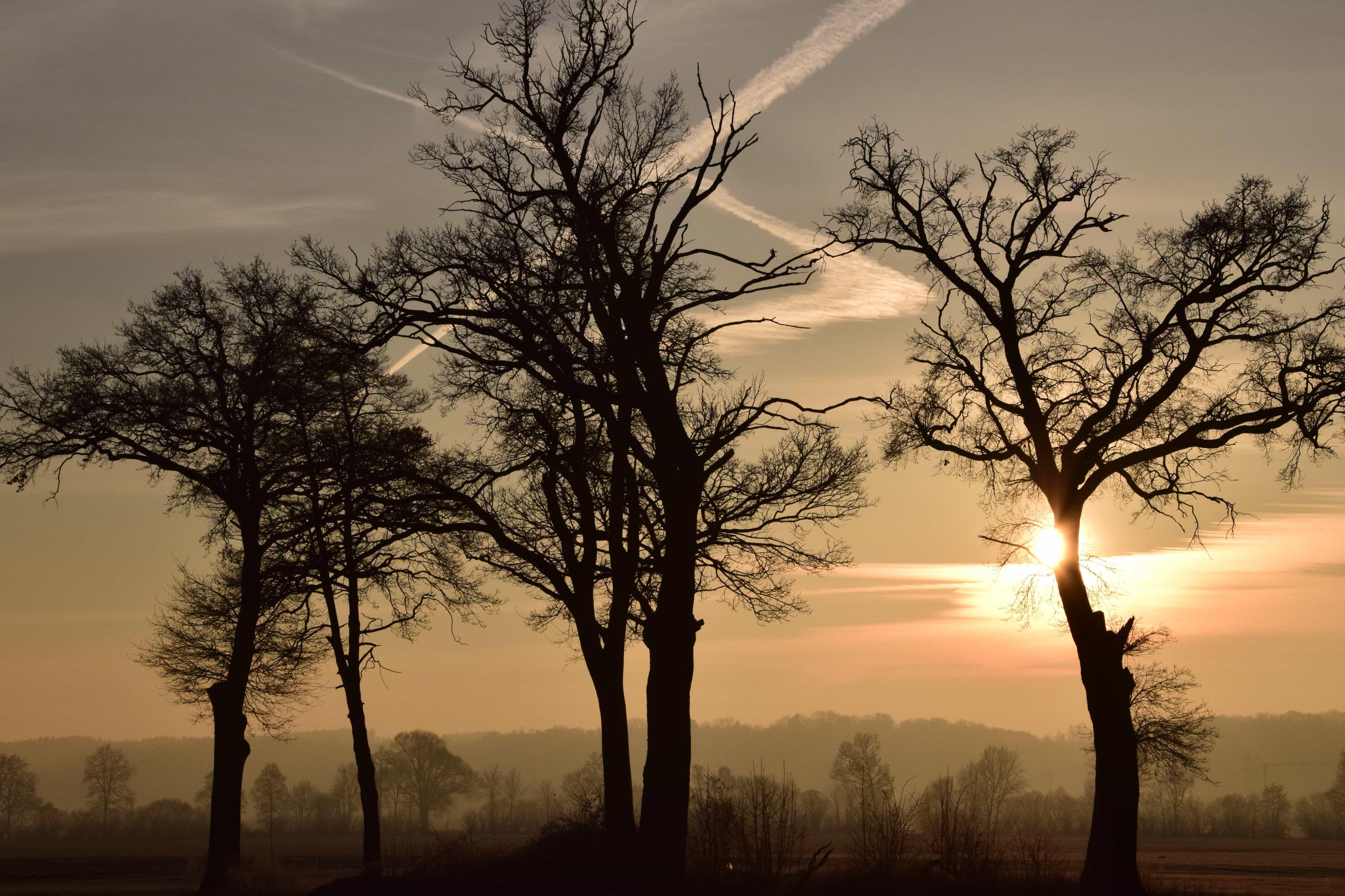 Free Picture Dawn Silhouette Tree Landscape Nature
