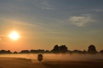 mist, blue sky, tree, sunrise, sunlight, dawn, sun, landscape, dusk, sky, atmosphere