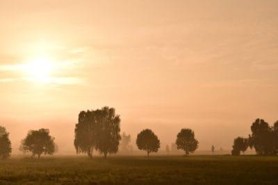 dawn, sunrise, mist, landscape, sun, fog, tree, nature, outdoor