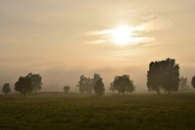 paysage, aube, brouillard, soleil, champ, lever du soleil, brume, arbre, brouillard, soleil, plein air