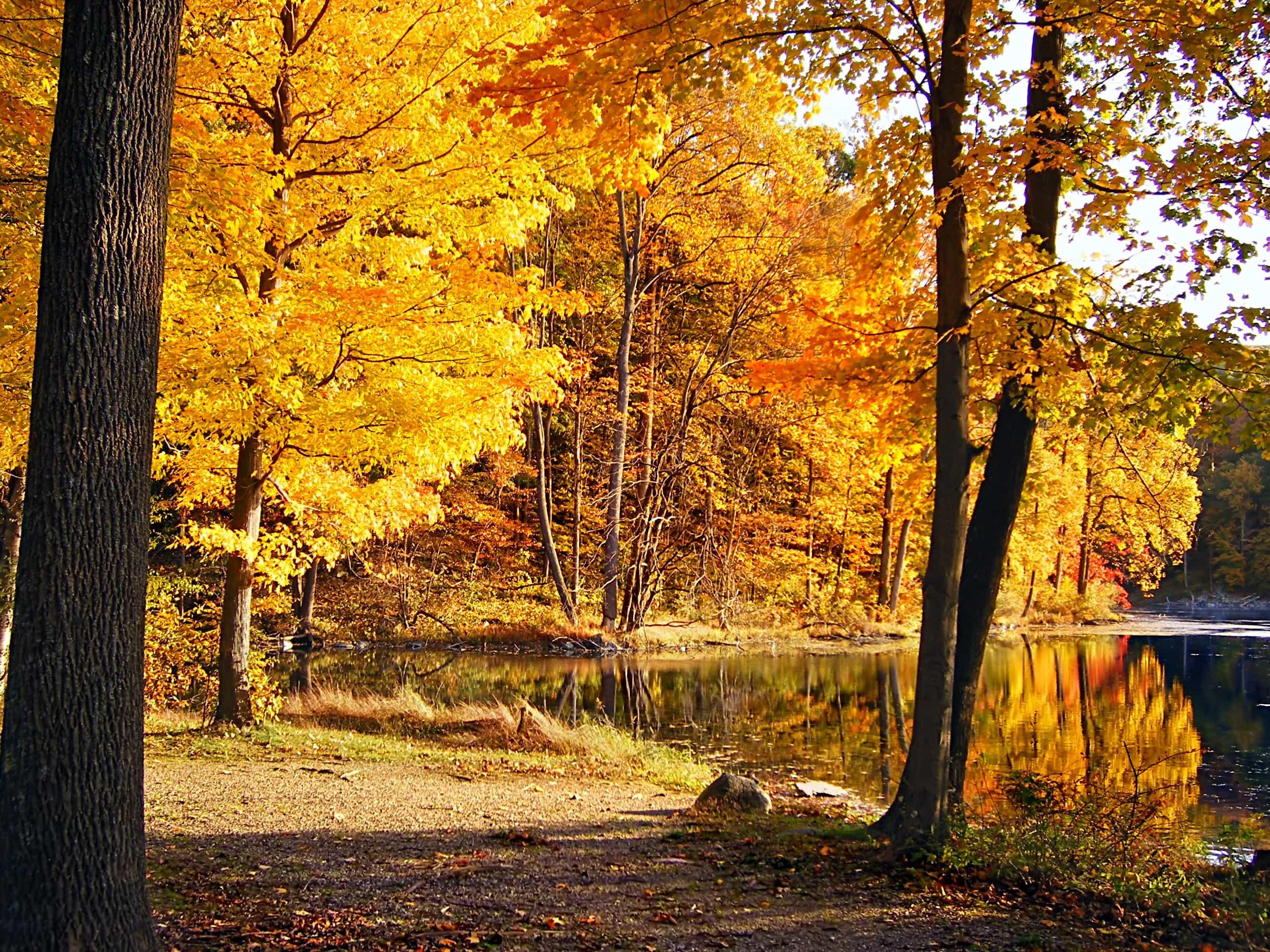 foto de Image libre: forêt, automne, lac, parc national, feuille, arbre ...