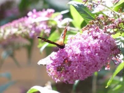 kvet, príroda, flora, leaf, makro, detail, zviera, Záhrada, strom, lupienok, hmyzu