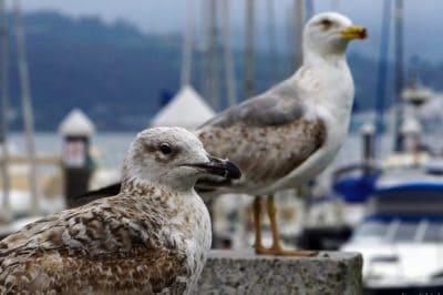 bird, wildlife, nature, animal, animal, ornithology, seabird, feather, beak