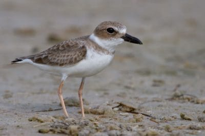 bird, wildlife, nature, shorebird, beak, feather, wild