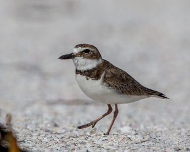 aves, animais selvagens, natureza, aves, ornitologia, zoologia, animais selvagens, animal