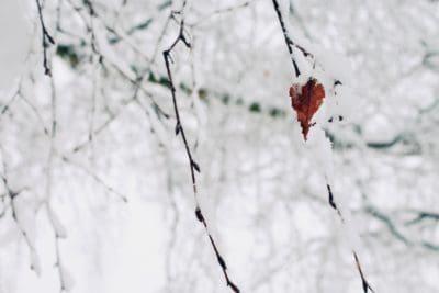 Blatt, Schneeflocke, Winter, Schnee, Frost, Natur, Kälte, Schnee, Zweig