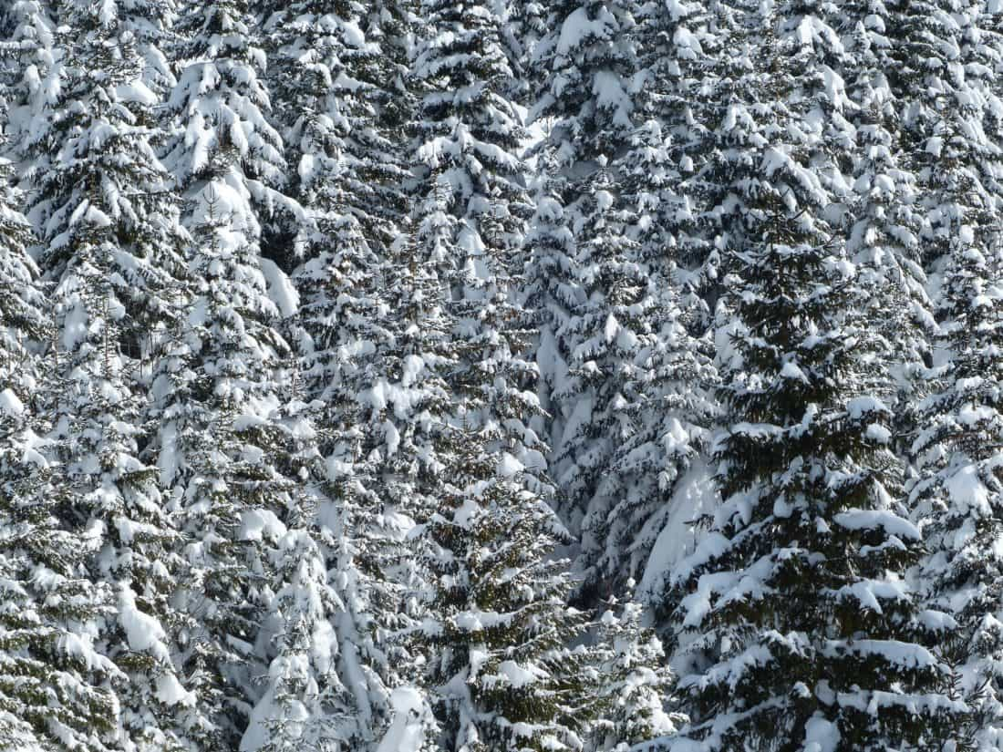 frost, winter, forest, texture, cold, snow