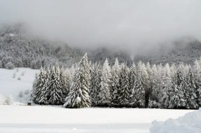 snow, winter, frost, cold, frozen, mist, cloud, fog, snowstorm, wood, landscape