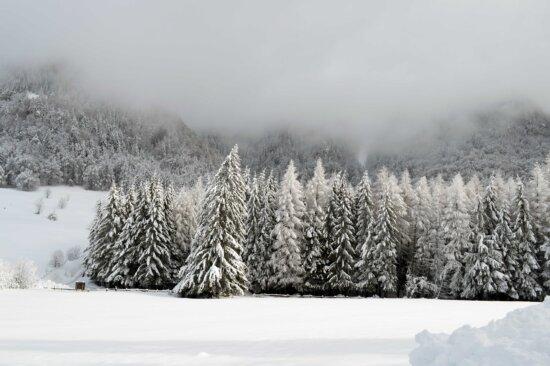 Schnee, Winter, Frost, kalt, gefroren, Nebel, Wolke, Nebel, Schneesturm, Holz, Landschaft