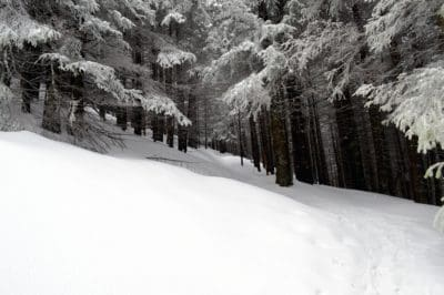 snow, winter, cold, forest, wood, ice, frozen, mountain, frost