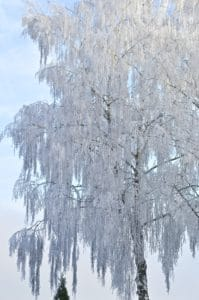 frost, winter, snow, hill, blue sky, cold, frozen, ice, tree, nature