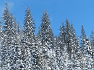 snow, winter, hill, blue sky, conifer, wood, frost, cold, mountain, frozen, tree