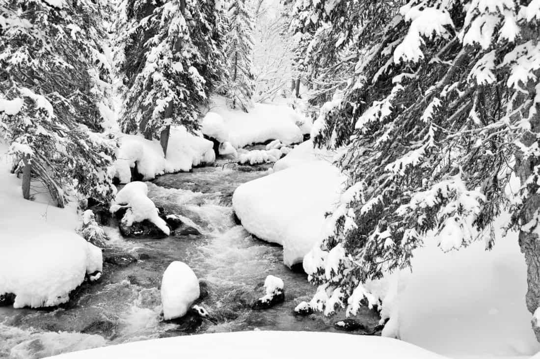 image libre  for u00eat  rivi u00e8re  neige  hiver  glace  froid  gel u00e9  arbre  gel  paysage
