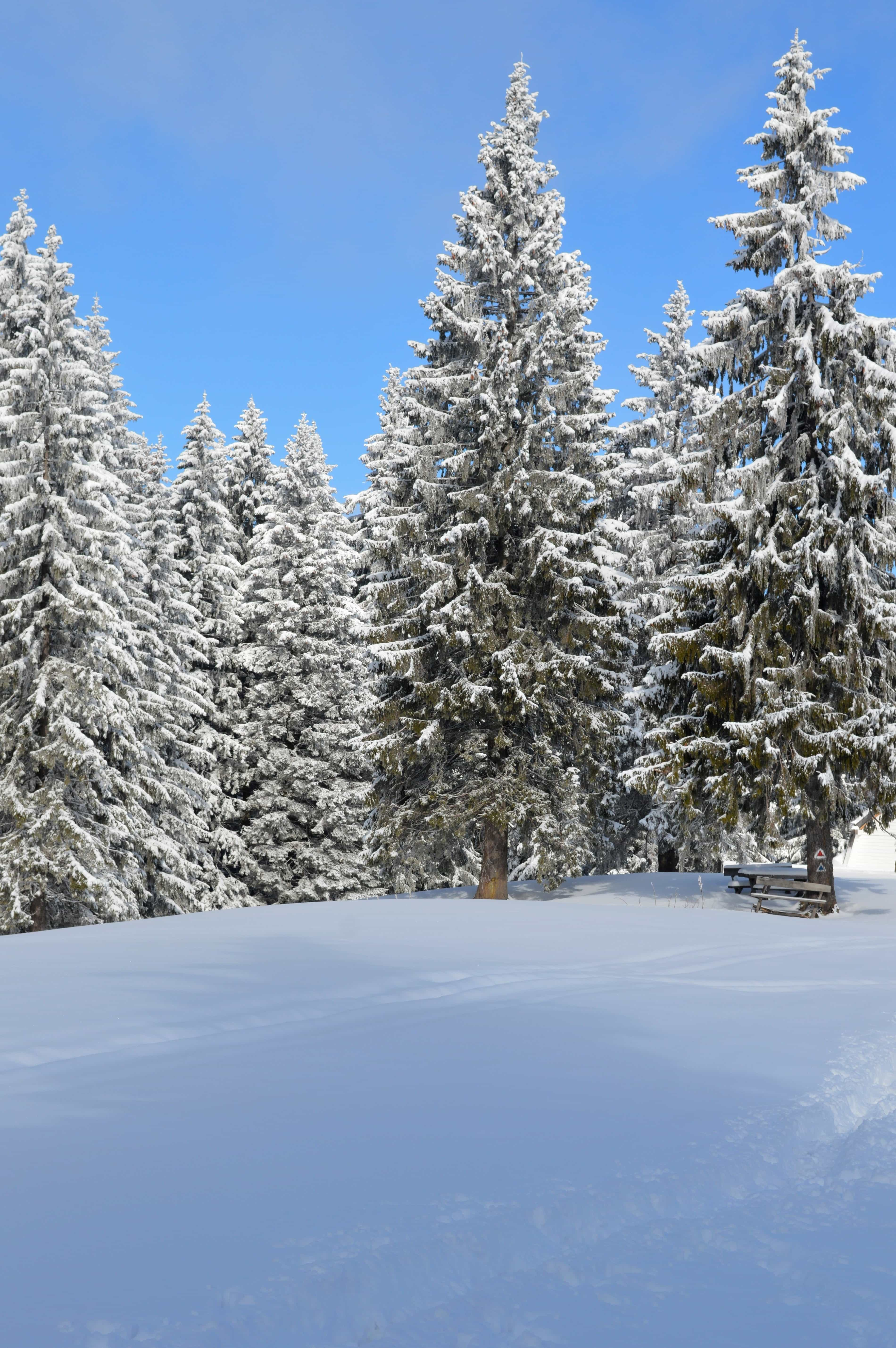 Free picture: snow, winter, cold, forest, blue sky, hill ...