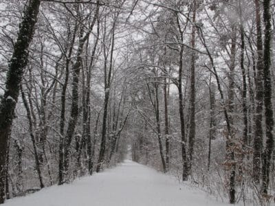 forêt, neige, hiver, bois, arbre, gel, froid, paysage, direction