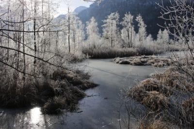 paesaggio, fiume, all'aperto, d'inverno, albero, neve, legno, natura, freddo, gelo