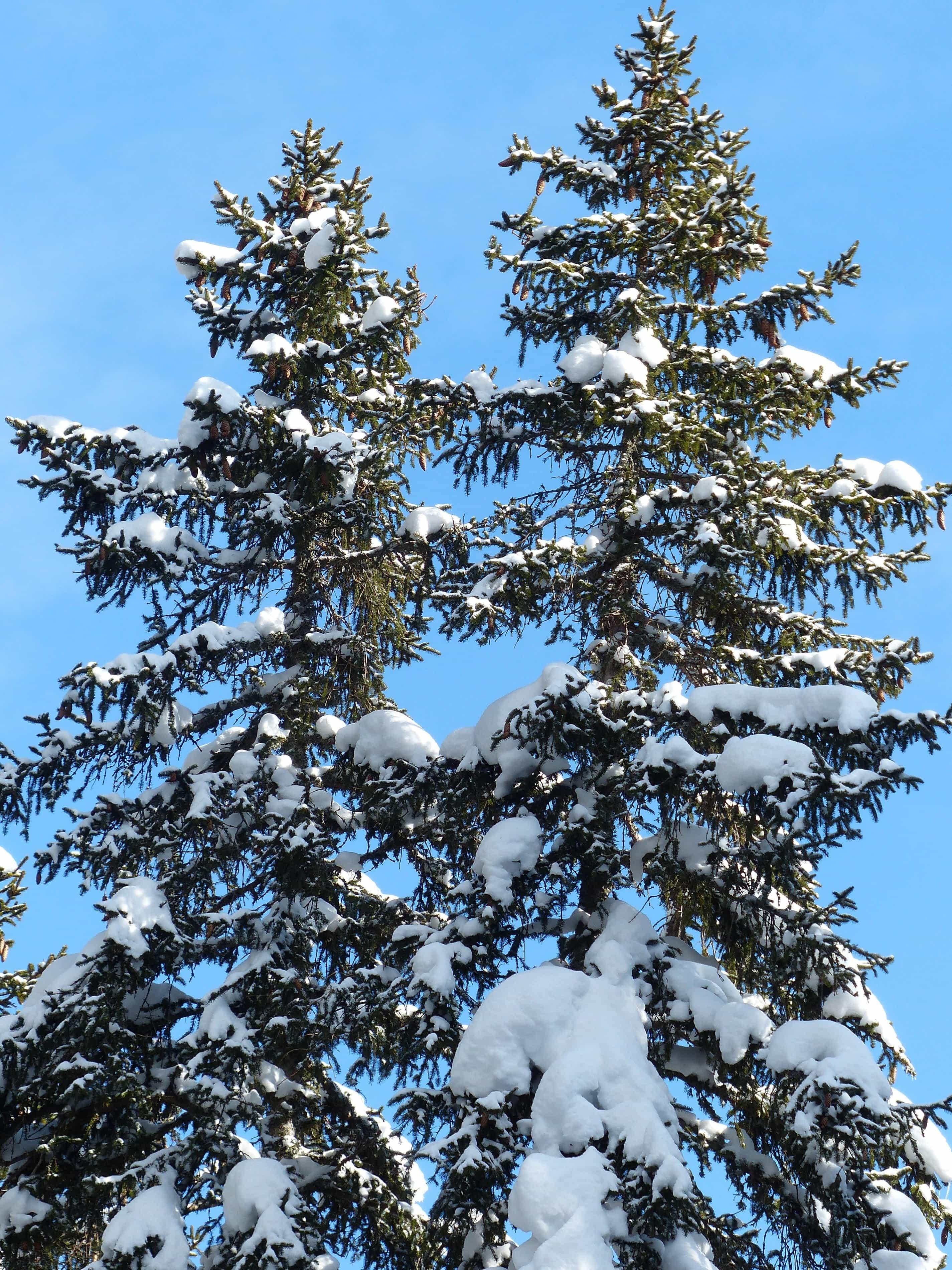 En la nieve - 2 4