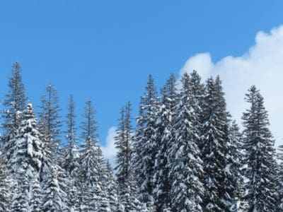 forest, conifer, snow, winter, wood, cold, frost, tree, mountain, landscape