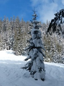 snow, winter, frost, cold, hill, forest, tree, wood, ice, frozen, evergreen
