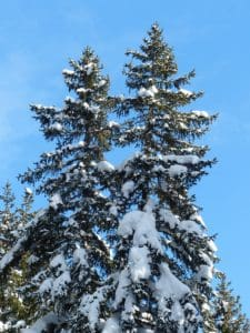 tree, hill, blue sky, winter, wood, snow, evergreen, landscape, pine