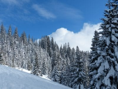 snow, winter, wood, hill, cloud, sky, cold, frost, mountain, evergreen