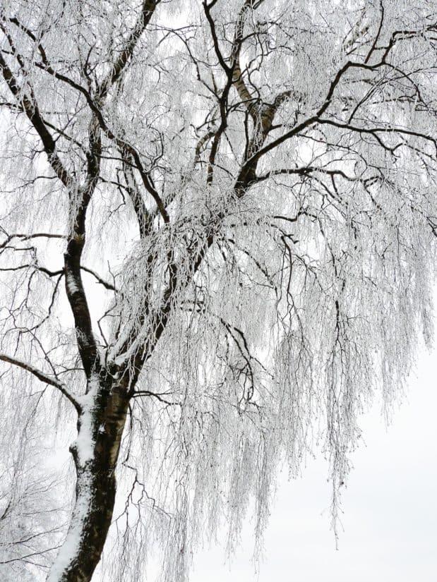 Baum, Winter, Berg, blauer Himmel, Zweig, Holz, Kälte, Frost, Schnee, gefroren