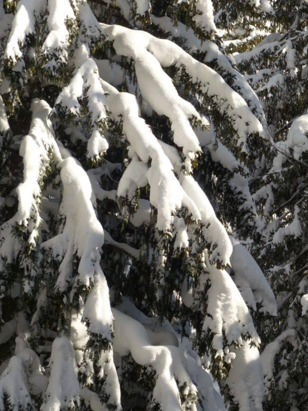 Winter, Schnee, Kälte, Frost, Wald, gefroren, Eis, Natur