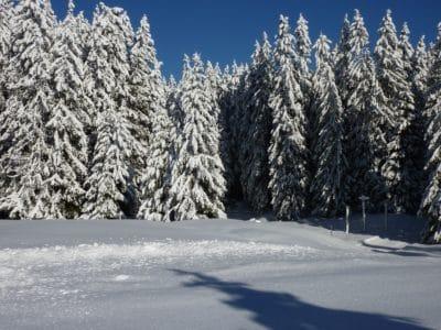 śnieg, zima, mróz, mrożone, hill, Błękitne niebo, zimno, cień, drewno, drzewo, krajobraz