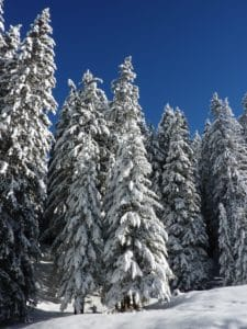 winter, snow, cold, frost, hill, blue sky, wood, frozen, tree, pine