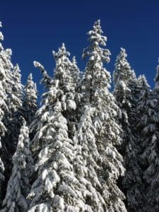 winter, snow, tree, forest, hill, blue sky, cold, frost, landscape, sky