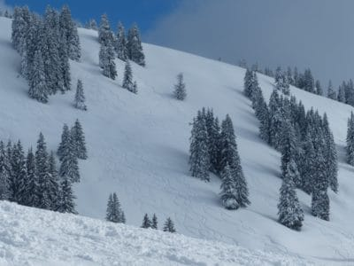 snow, winter, hill, blue sky, wind, mountain, cold, wood, evergreen, powder